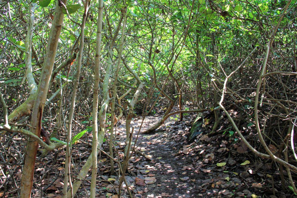 Ausläufer vom tropischen Urwald