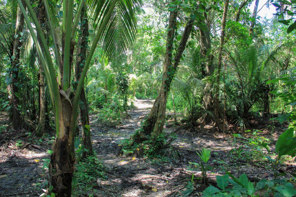 Durch den Urwald im Tayrona Nationalpark