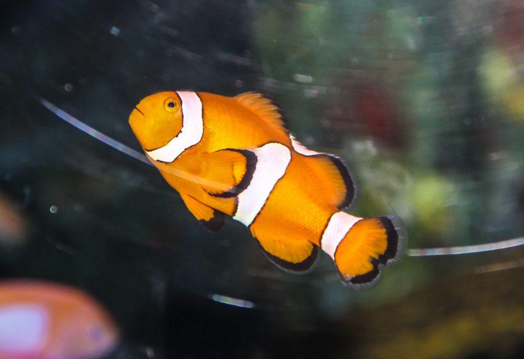 Findet Nemo - Shanghai Ocean Aquarium