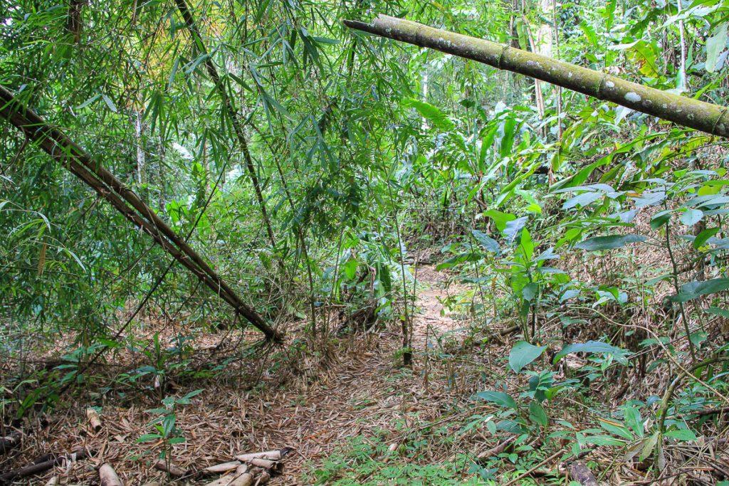 Rein in den Urwald von Tobago