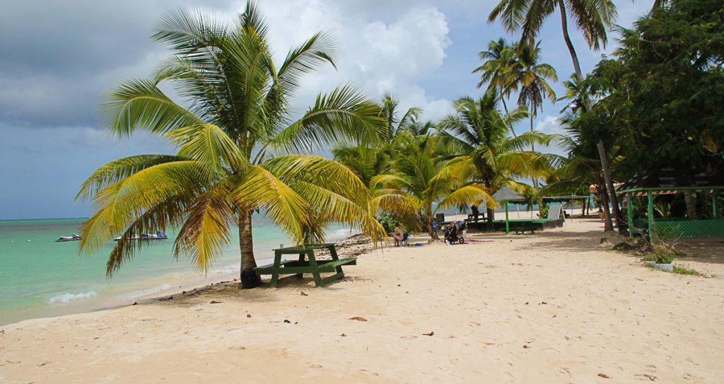 Kokospalmen spenden Schatten
