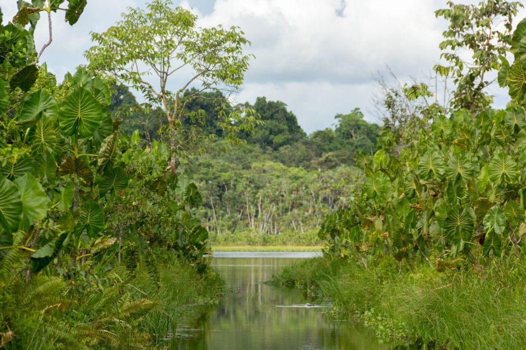 Nebenarm der Lagune von Pilchicocha