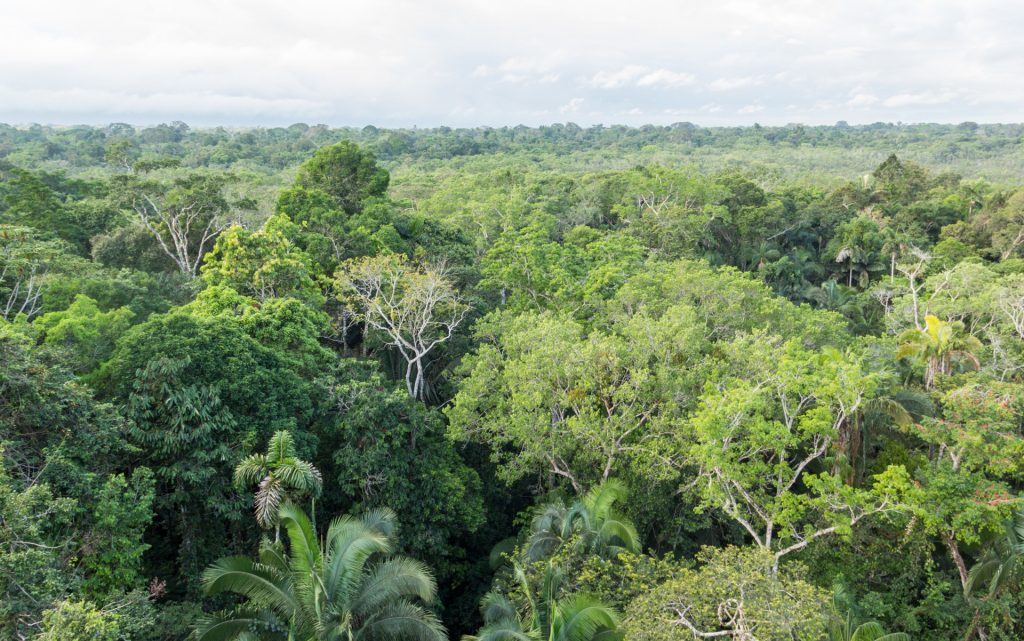 Blick über den Regenwald bei der Sacha Lodge