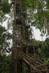 Holzturm am Kapok-Baum