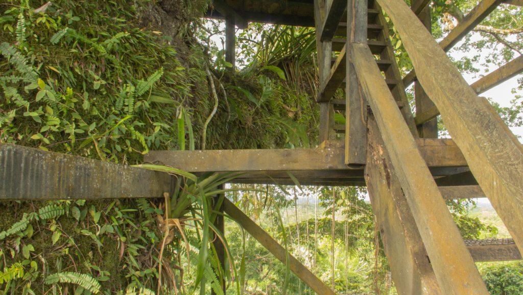 bewachsener Kapok-Baum