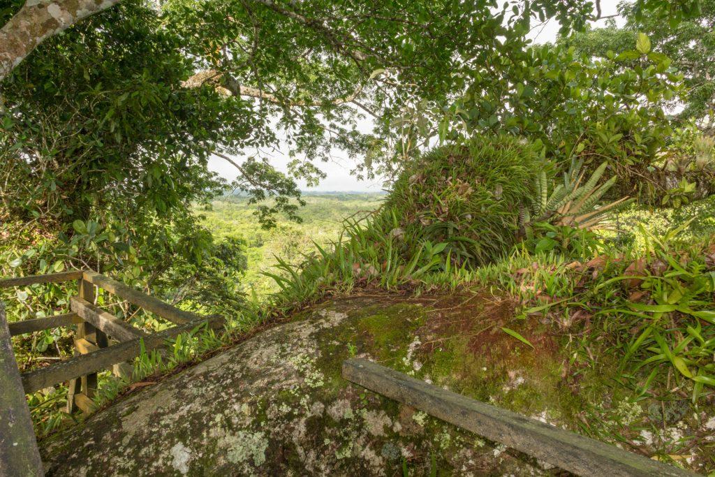 Blick vom Kapok-Turm über en Urwald
