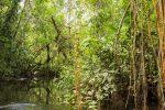 per Boot durch den Urwald
