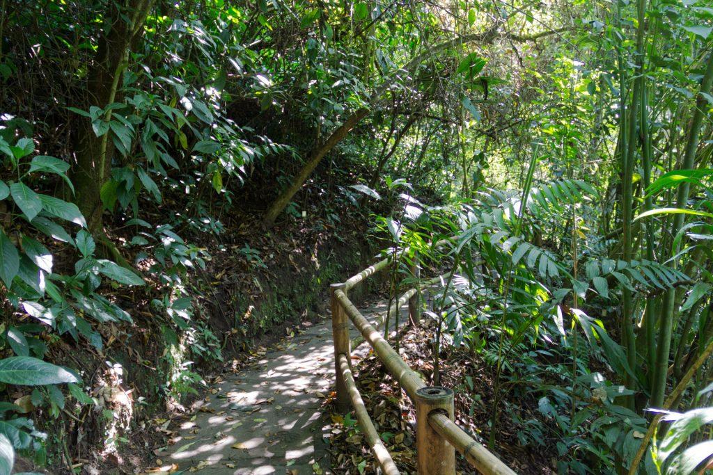 Wege im botanischen Garten