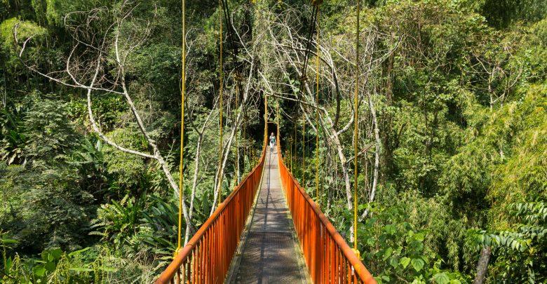 Hängebrücke im botanischen Garten von Quindio