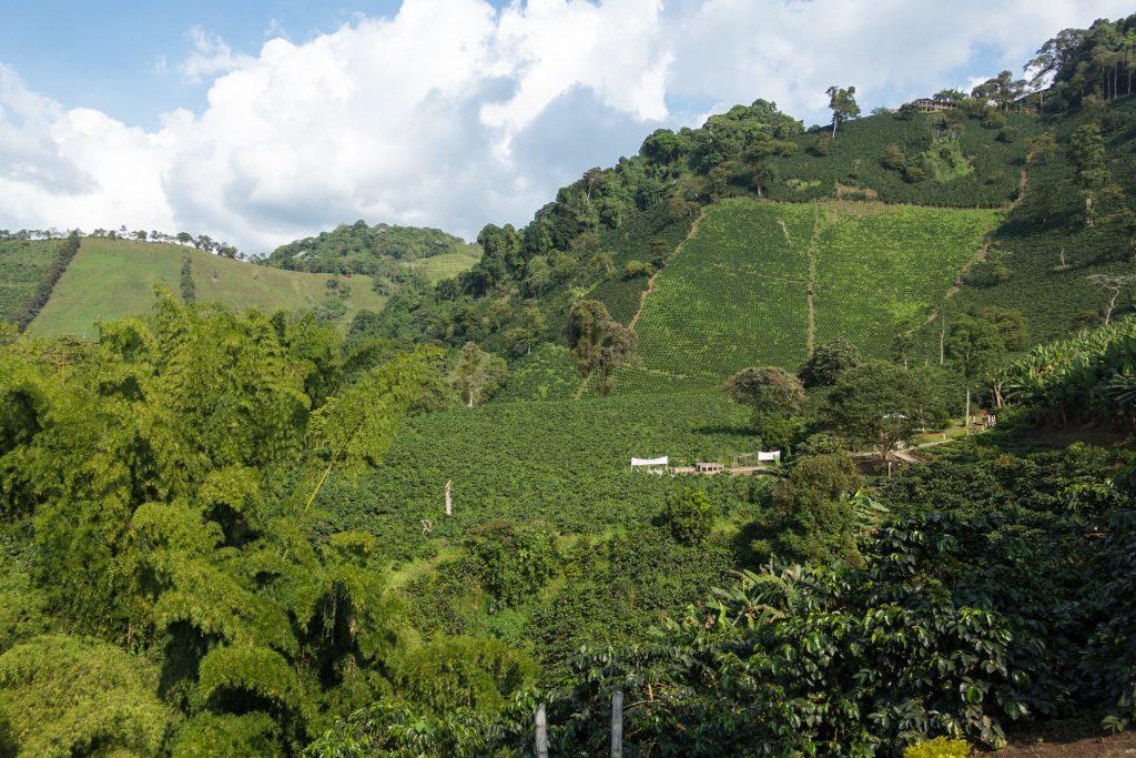 Kaffeeplantagen in Kolumbien