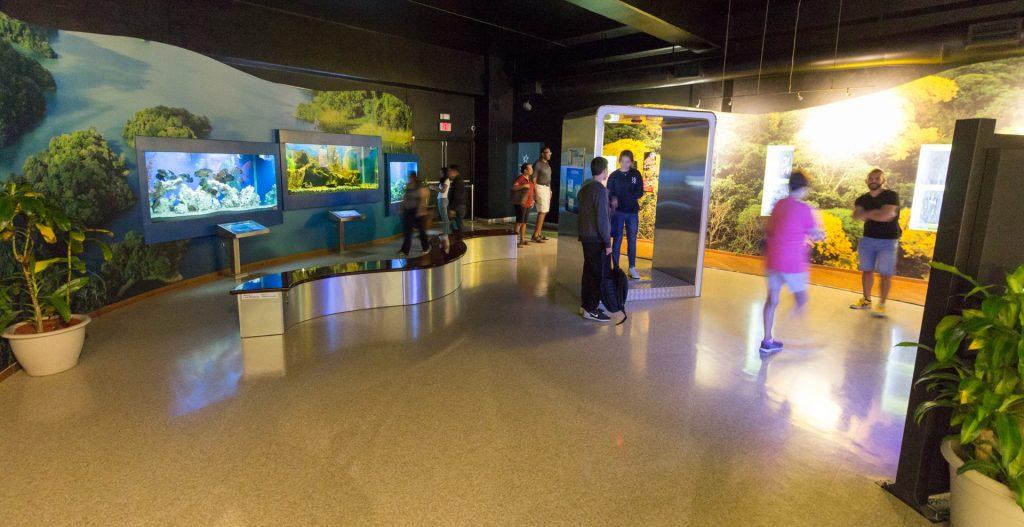 Ausstellung zur Flora&Fauna