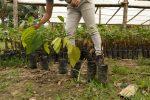 verschiedene Stadien der jungen Pflanzen