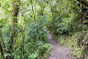 Wanderung zum Gocta Wasserfall