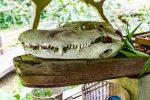 Kroko-Deko