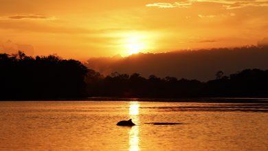 grauer und rosa Flussdelfin im Sonnenuntergang