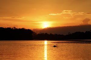 grauer Amazonasdelfin im Sonnenuntergang
