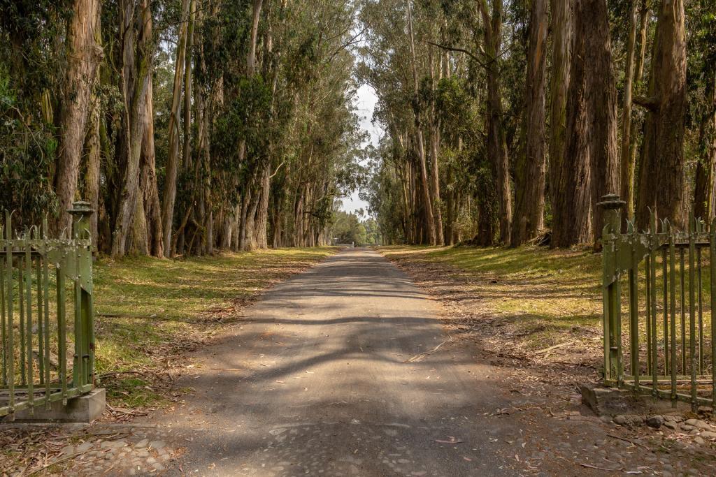Einfahrt durch majestätische Eukalyptusbäume