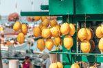 Zitronen - vielleicht die besten der Welt