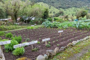 """Farm to Table"" in Papallacta"