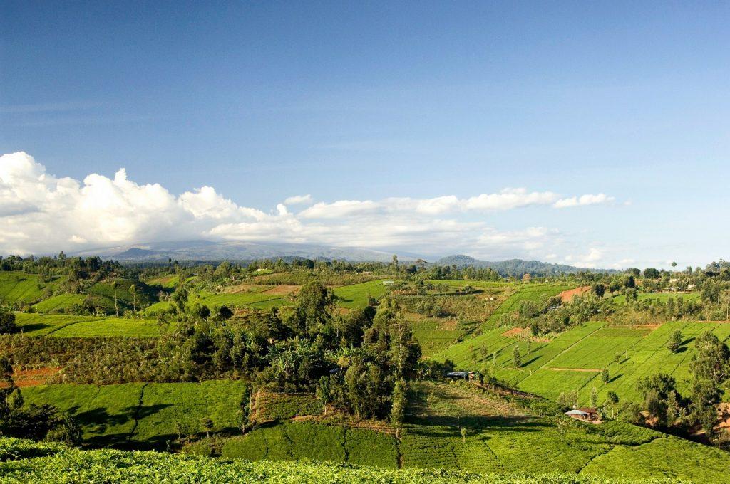 Grünes Kenia