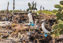 Bild von Die beste Reisezeit für die Galápagos-Inseln