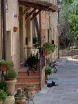 Katzen chillen in der Mittagshitze San Savino Umbrien