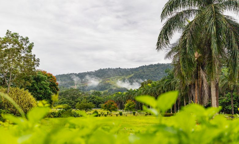 Wie in ganz Costa Rica: die Umgebung der Casa Turire ist grün!