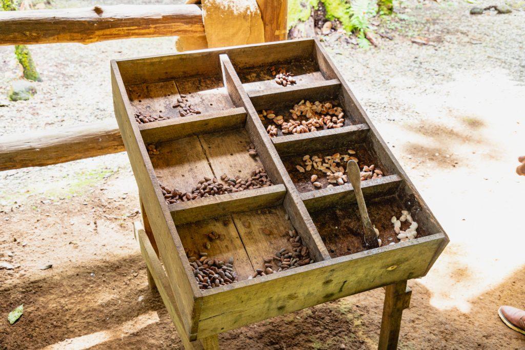 Fermentation von Kakaobohnen