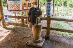 Grobes schroten der Kakaobohnen in einem Mörser