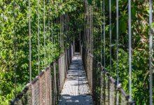 Hängebrücken & Urwald: Der Mistico Hanging Bridges-Park in Costa Rica